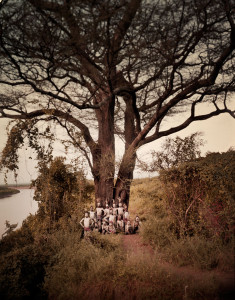 Omo valley tree