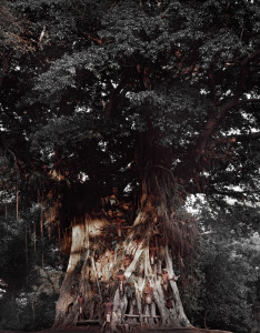Majestic Banyan on Tanna Island